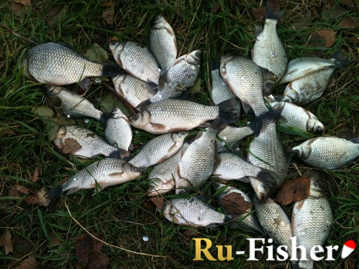 Форум рыбаков тюмени фион - 10fdd